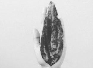 Bay leaf, inquiry image 2017
